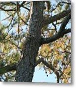 Bald Head Tree Metal Print