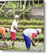 Bali Farming Metal Print