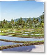 Bali Rice Paddies Metal Print