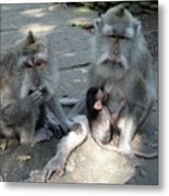 Balinese Monkey Family Metal Print