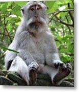 Balinese Serious Monkey Metal Print