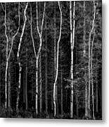 Ballysallagh Forest Mono Metal Print