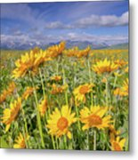 Balsam On The Rocky Mountain Front Metal Print