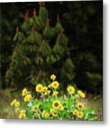 Balsamroot And Evergreen Metal Print