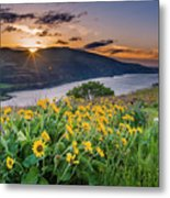 Balsamroot At Sunrise Metal Print