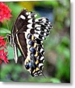 Baltimore Checker Spot Butterfly Metal Print