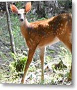 Bambi1 Metal Print