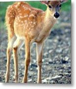 Bambi2 Metal Print