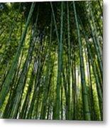 Bamboo 01 Metal Print