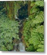 100837-bamboo And Ferns Creek  Metal Print