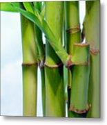 Bamboo And Sky Metal Print