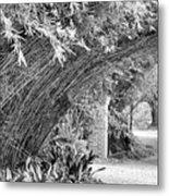 Bamboo Black White Rip Van Winkle Gardens  Metal Print