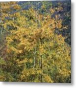 Bamboo Forest In The Fall Metal Print