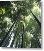 Bamboo Forest Metal Print by Mitch Warner - Printscapes