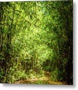Bamboo Hike Metal Print