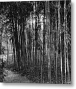 Bamboo In Black And White Metal Print