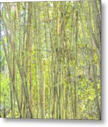 Bamboo In San Diego Zoo Metal Print