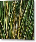 Bamboo Shoots  Metal Print