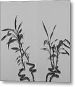 Bamboo Shutes Metal Print