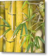 Bamboo Stalks Metal Print