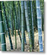 Bamboo Tree Forest, Close Up Metal Print