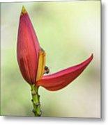 Banana Flower Bud  Metal Print