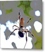 Banana Spider Lunch Time 1 Metal Print