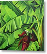 Banana Tree Flower Metal Print