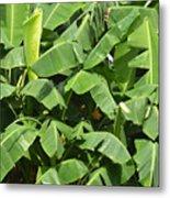 Banana Trees Metal Print
