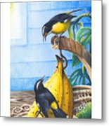 Bananaquits And Bananas Metal Print