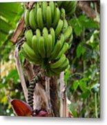 Bananas In Africa Metal Print