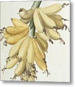 Bananas Metal Print by Pierre Joseph Redoute