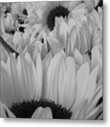 Band W Sunflowers Metal Print