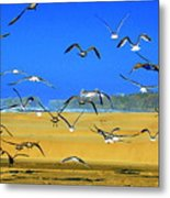 Bandon Gulls Metal Print