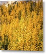 Banff Golden Larch Dream World Metal Print