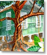 Banyan In The Backyard Metal Print