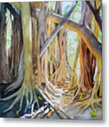 Banyan Shadow And Light Metal Print