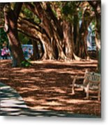 Banyans - Marie Selby Botanical Gardens Metal Print