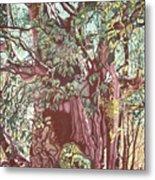 Baoba In Foliage Metal Print