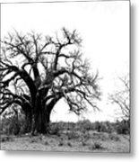 Baobab Landscape Metal Print