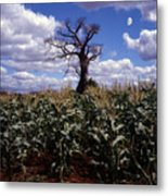 Baobaba Tree Metal Print