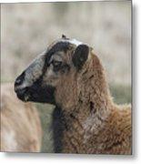 Barbados Blackbelly Sheep Profile Metal Print