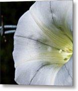 Barbed Flower Metal Print