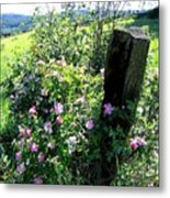 Barbed Wire And Roses Metal Print
