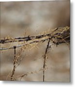 Barbed Wire Entwined With Dried Vine In Autumn Metal Print