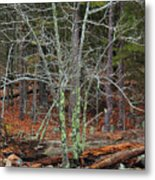 Bare Tree And Boulders In Mark Twain Forest Metal Print