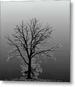 Bare Tree In Fog- Pe Filter Metal Print