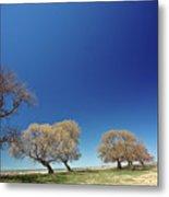 Bare Trees Along Shore Of Lake Manitoba Metal Print