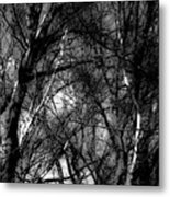 Bare Trees II Metal Print