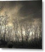 Bare Trees In A Winter Sunset Metal Print
